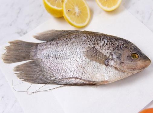Ikan Gurame Rpp.45.000/Kg
