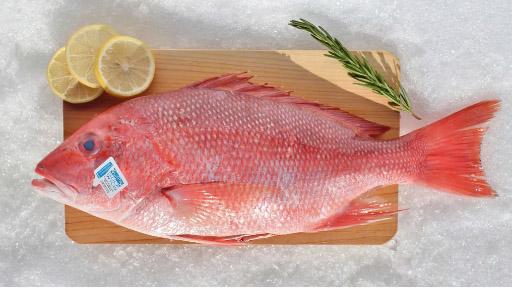 Ikan Kakap Merah Rp.50.000/Kg