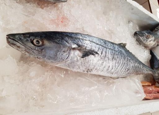 Ikan Tenggiri Rp.75.000/Kg